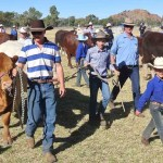 p2127-cattle-at-the-show-1
