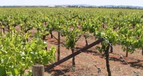 p2217-Rocky-Hill-vineyard-SM
