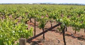 p2217-Rocky-Hill-vinyard-SM