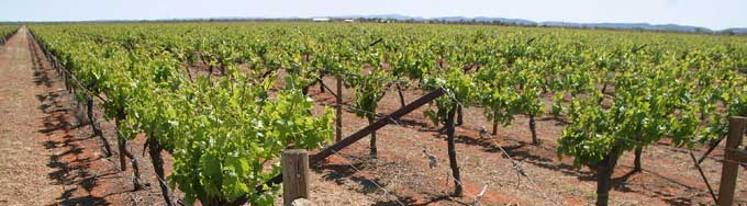 p2217-Rocky-Hill-vineyard