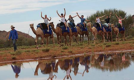 p2231-tourism-camels