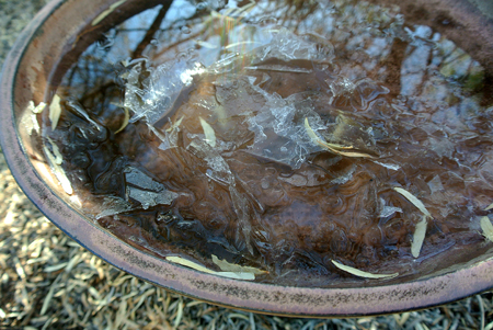 p2237-ice-in-bird-bath