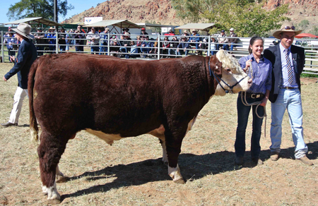 p2252-Show-champion-bull-1