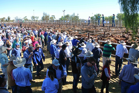 p2252-cattle-sale-2