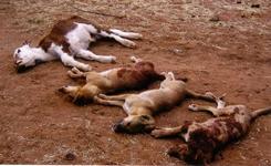 p2263-dead-dog-SM