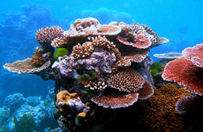 p2267-Great-Barrier-Reef-SB