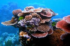 p2267-Great-Barrier-Reef-SB