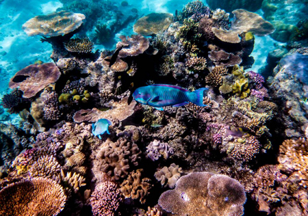p2267-great-Barrier-reef-3