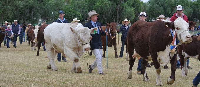 p2337-Show-2016-cattlemen-3