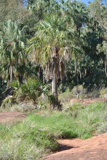 p2338-Palm-Valley-buffel-5
