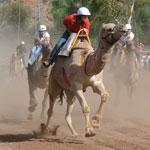 p2339-Camel-Cup-SM