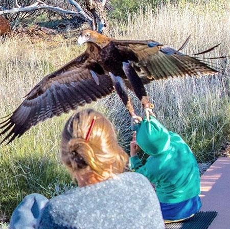 p2341-eagle-1