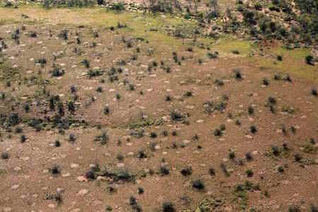 p2361 Termite Gillam