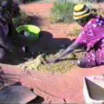 p2361 Termite grinding 2
