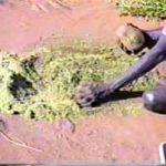 p2361 Termite grinding 3