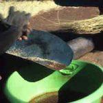 p2361 Termite grinding 4
