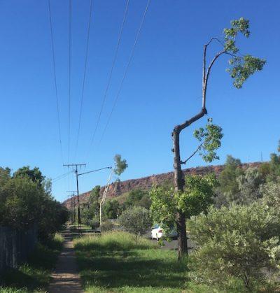 p2404 mangled trees 2 450