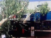 p2416 tree 3 SM