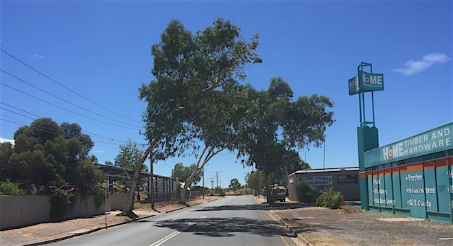 p2417 Trees Smith Street 660
