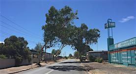 p2417 Trees Smith Street SM