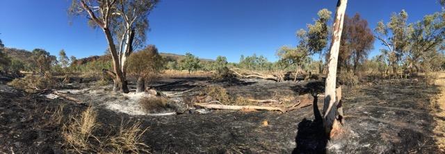 2424 burnt area