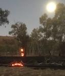 p2424 burning trees SM