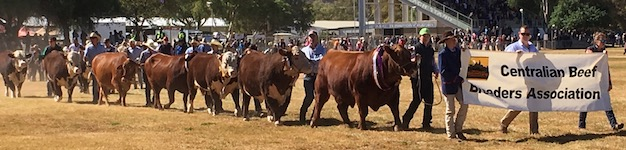 2459 Show cattle 1 SM