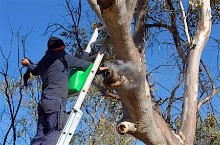 p2468 Trees Walsh arborist 1 430