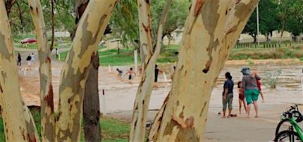 p2468 Trees Walsh river 430