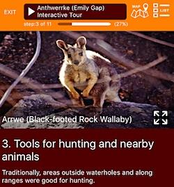 2482 Emily APP wallaby