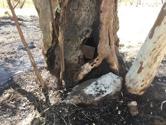 p2492 Tree fire basal hollow 330