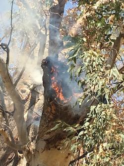 p2492 Tree fire hollow 1 250