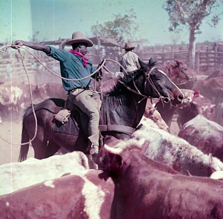 2482 Aboriginal stockman OK