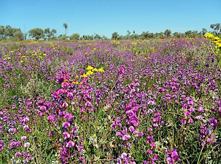 2503 Outback Way wild flowers OK