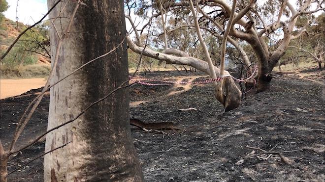 p2510 Fiona fire trunks close