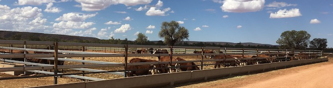 5224 Orange Creek cattle yeards OK