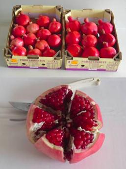 2555 pomegranate