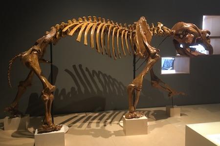 2556 megafauna 4