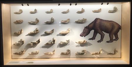 2556 megafauna 6