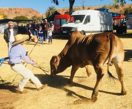 2557 show bull 1