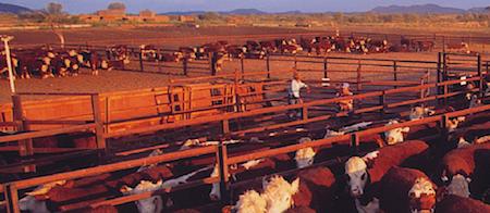 2586 cattle OK