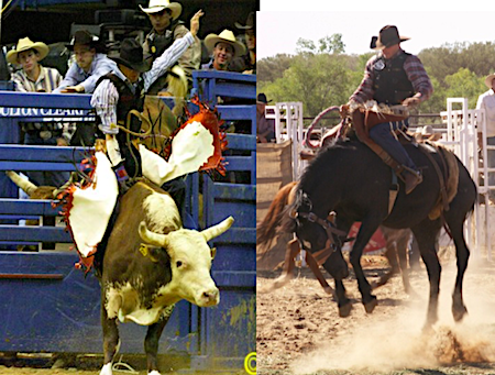 2588 Rob Cook rodeo
