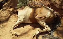 2602 dead horse SM