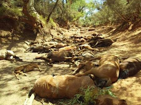 2602 dead horses OK
