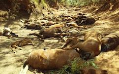 2602 dead horses SM
