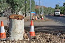 2613 Stuart Highway trees SM