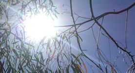 p2615 Heatwave sun SM
