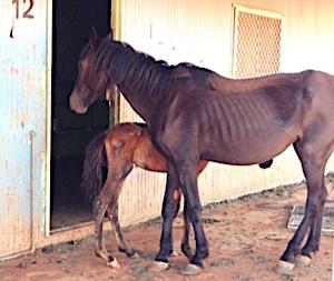 2629 starving horses 5 OK