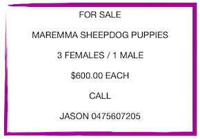 2631 puppies